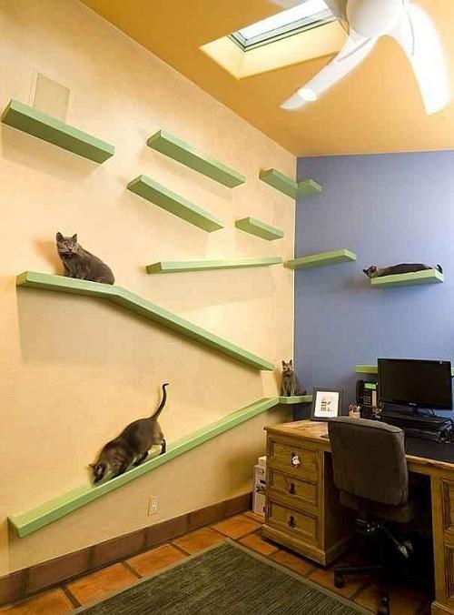 Персонализированный офис с кошками