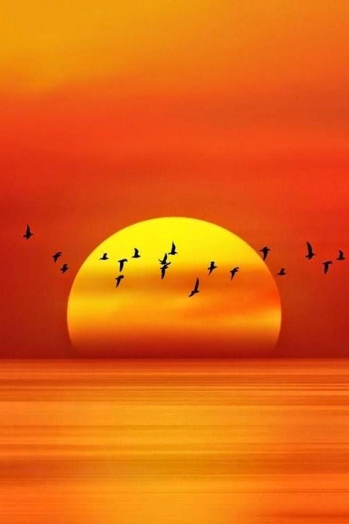 Птицы летящие на фоне солнца
