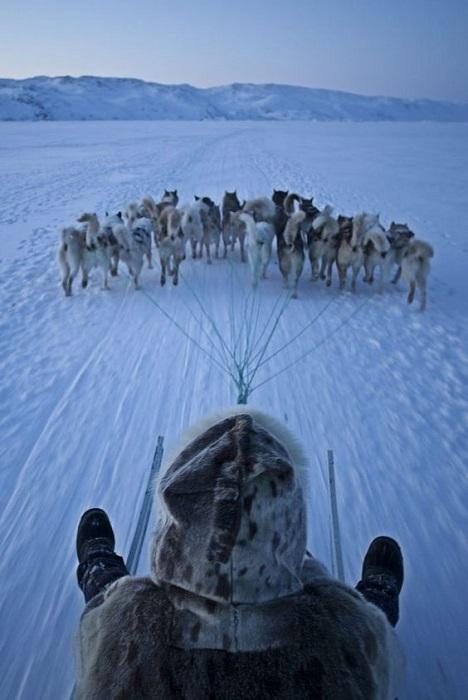 Поездка на собачьей упряжке зимой